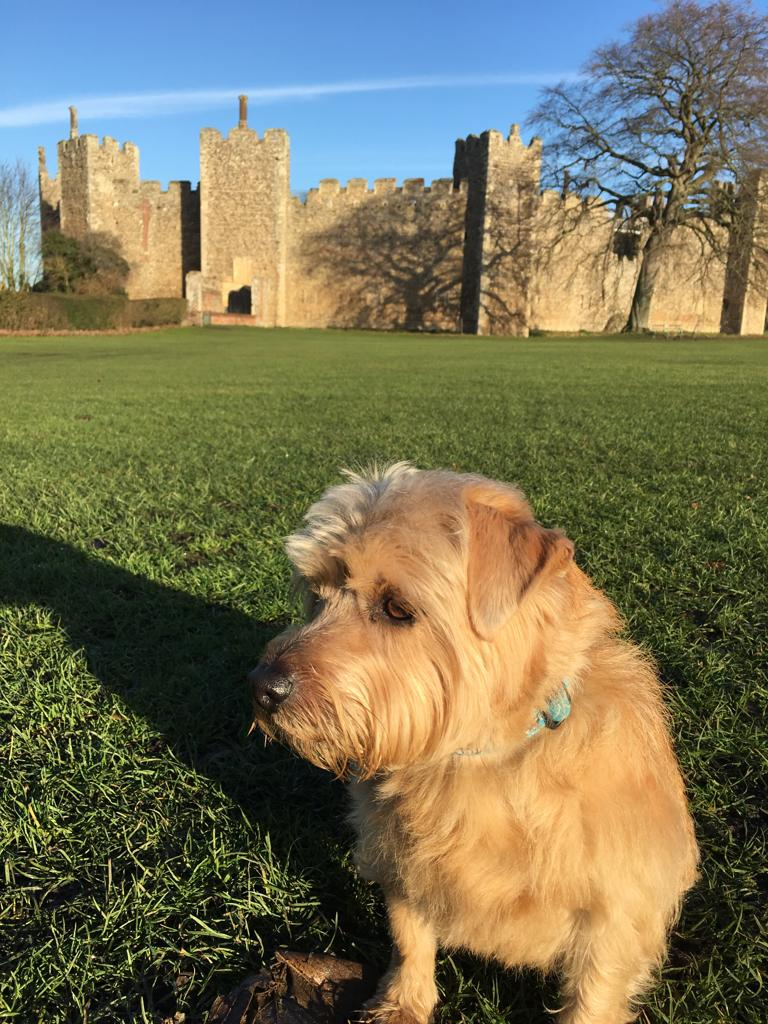 Dog Friendly Days out in Suffolk