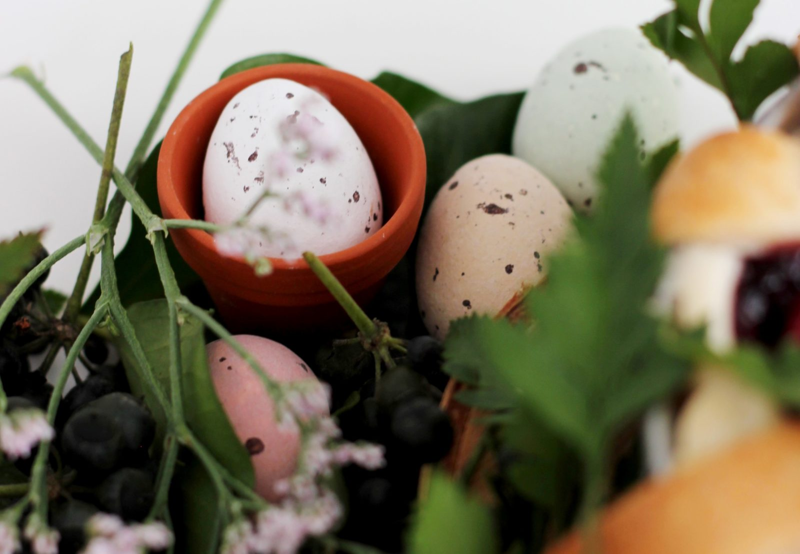 Variety of eggs surrounded by foliage
