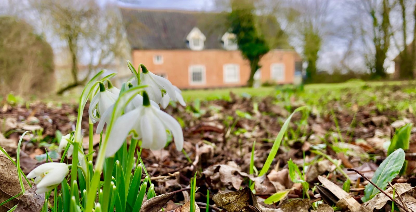 Snowdrops on the ground outside of Lime Tree Farm