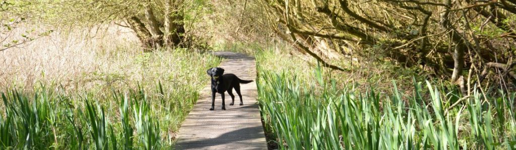 Dog friendly cottages Suffolk