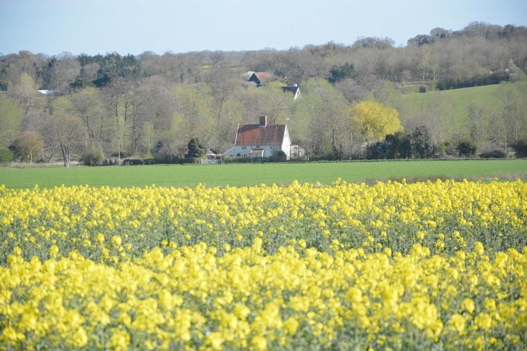 House-with-oil-seed-rape-field
