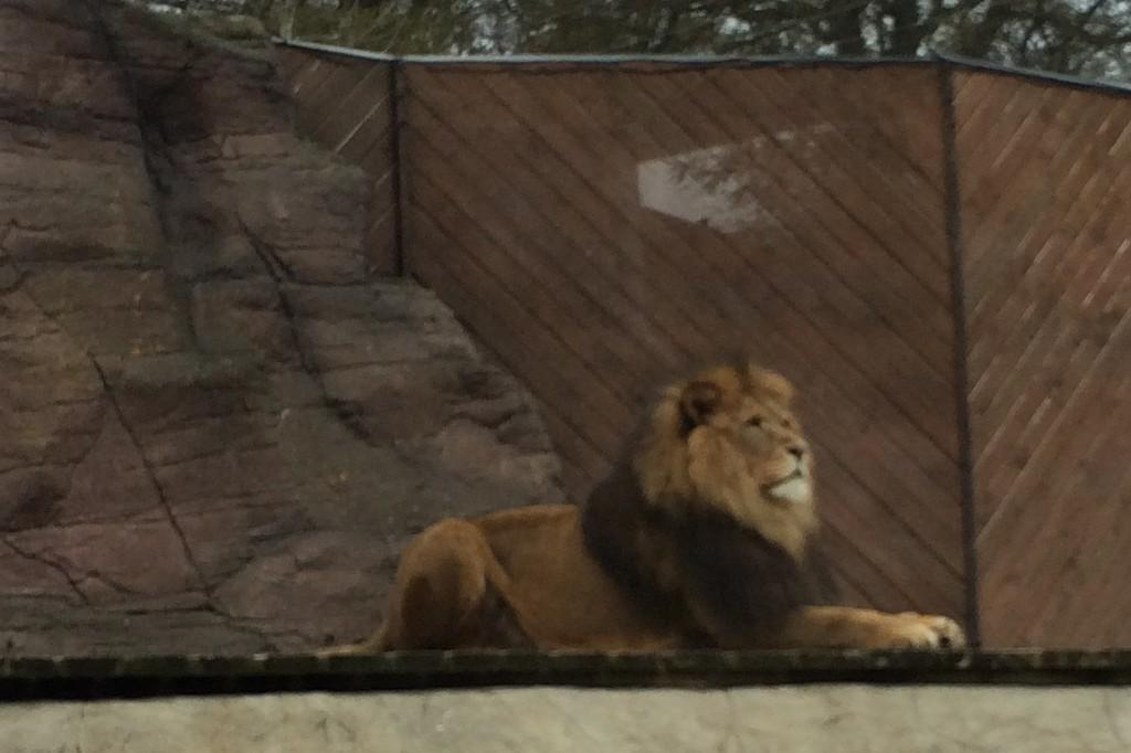 colchester-zoo-2