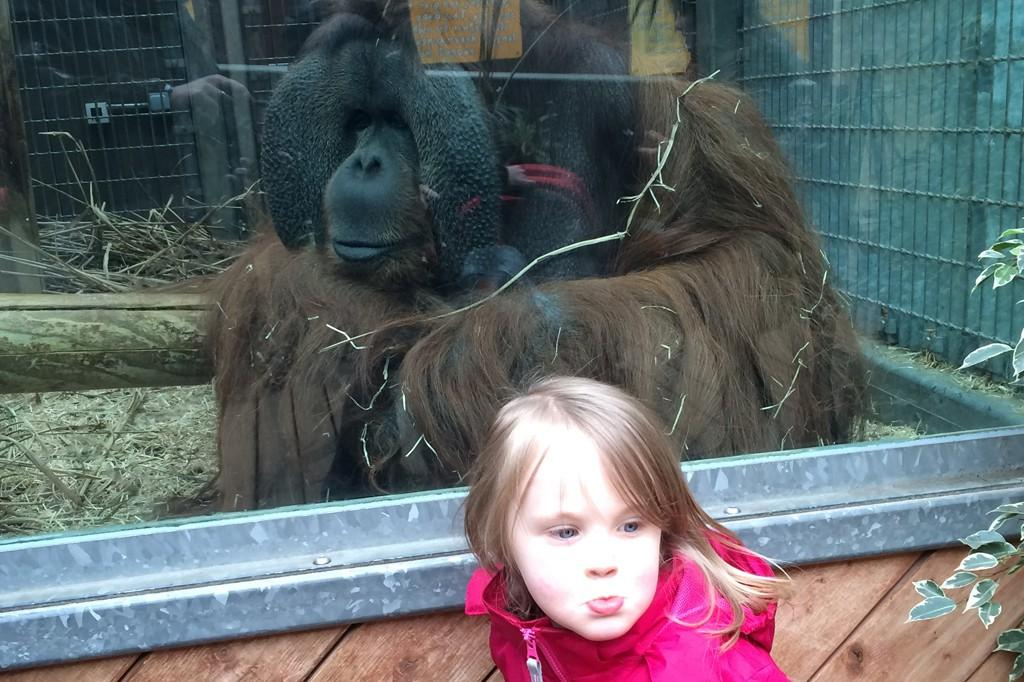 colchester-zoo-3