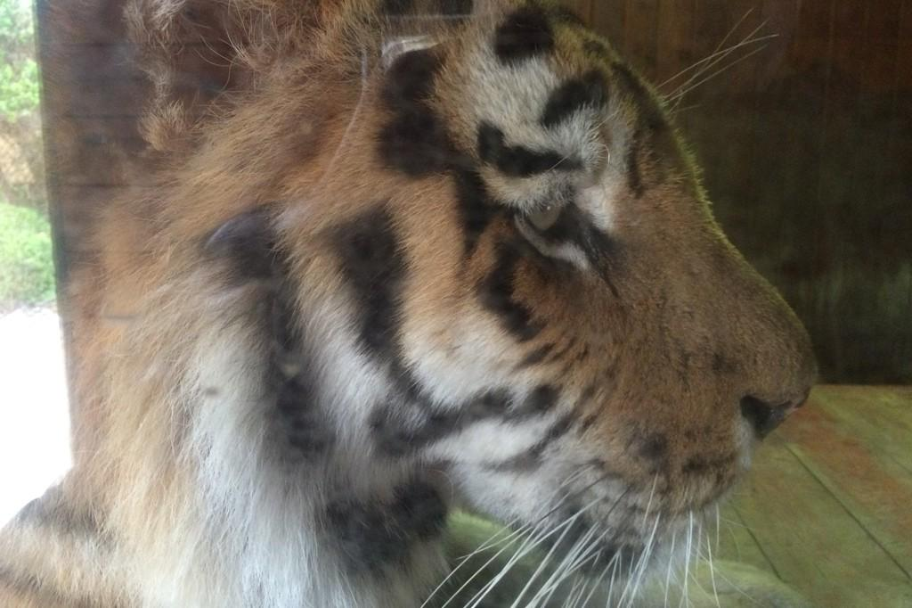 colchester-zoo-4